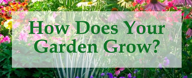 Image result for how does your garden grow